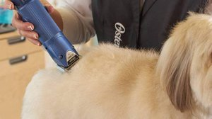 Dog clipper and grooming
