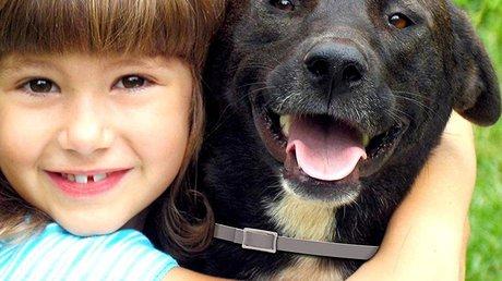 dog flea and tick collar