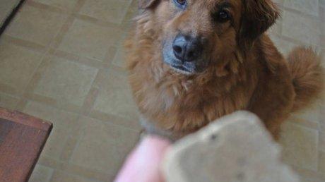 Freeze-Dried Dog Foods