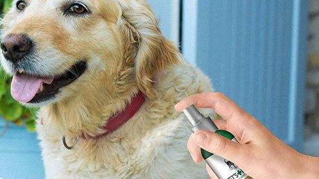 Flea Spray for dog