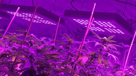 LED grow light for plant